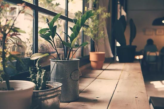 a windowsill full of plants and beautiful lighting