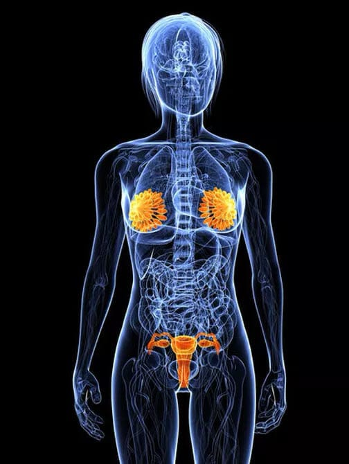the endocrine system taking care